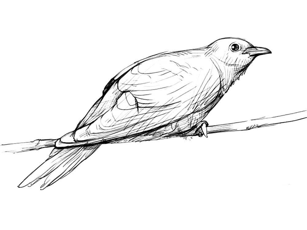 Картинки для срисовки карандашом кукушка