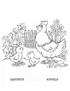 Курица картинки раскраски (10)