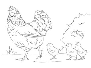 Курица картинки раскраски (12)