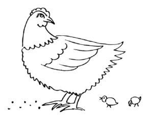 Курица картинки раскраски (14)