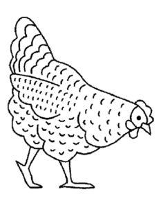 Курица картинки раскраски (18)