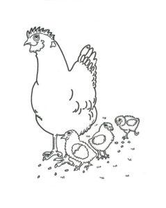 Курица картинки раскраски (2)