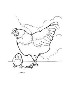 Курица картинки раскраски (20)