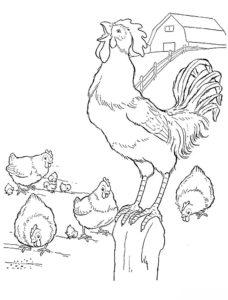 Курица картинки раскраски (21)