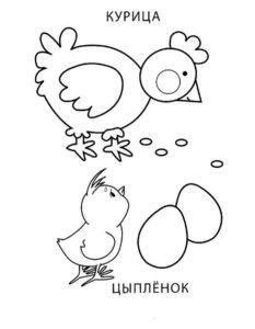 Курица картинки раскраски (27)