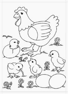 Курица картинки раскраски (30)