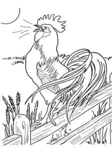 Курица картинки раскраски (39)