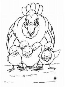 Курица картинки раскраски (4)