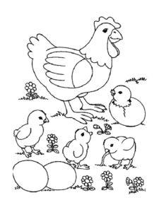 Курица картинки раскраски (41)
