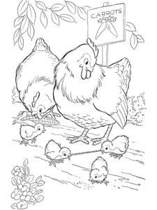 Курица картинки раскраски (43)