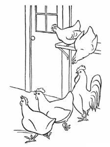 Курица картинки раскраски (45)
