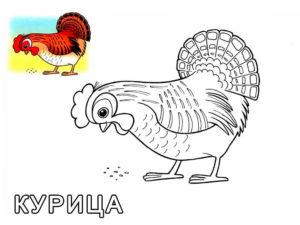 Курица картинки раскраски (49)