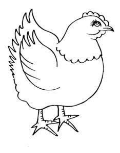 Курица картинки раскраски (5)