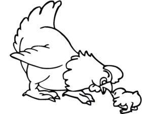 Курица картинки раскраски (52)