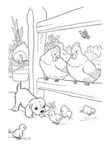 Курица картинки раскраски (56)