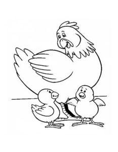 Курица картинки раскраски (58)