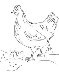 Курица картинки раскраски (59)