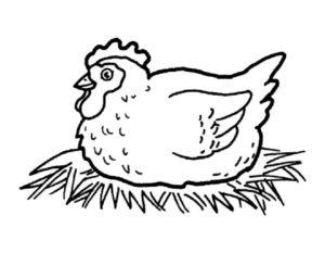 Курица картинки раскраски (7)