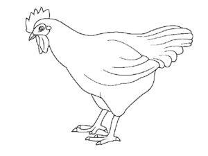 Курица картинки раскраски (8)