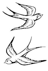 Ласточка картинки раскраски (38)