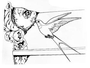 Ласточка картинки раскраски (7)