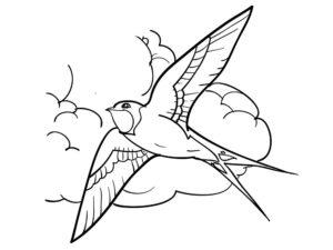 Ласточка картинки раскраски (8)