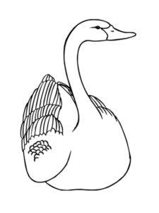 Лебедь картинки раскраски (11)