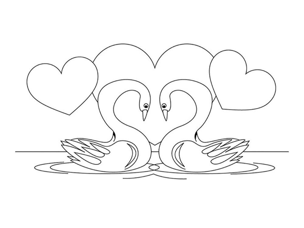 Два лебедя картинки карандашом