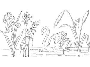 Лебедь картинки раскраски (16)