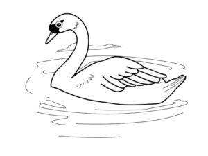Лебедь картинки раскраски (18)