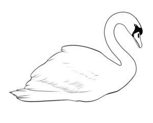 Лебедь картинки раскраски (2)