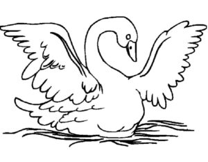 Лебедь картинки раскраски (20)