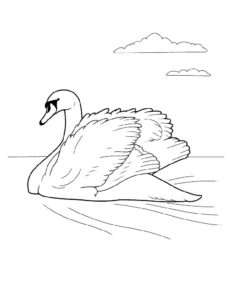 Лебедь картинки раскраски (23)