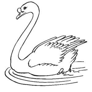 Лебедь картинки раскраски (25)