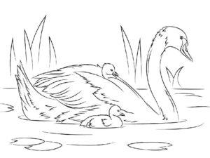 Лебедь картинки раскраски (27)