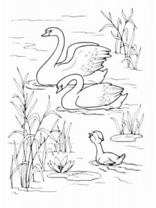 Лебедь картинки раскраски (29)