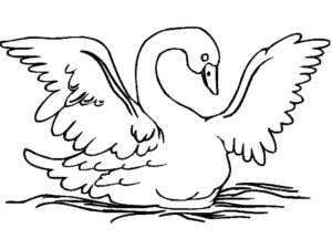 Лебедь картинки раскраски (3)