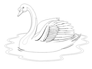Лебедь картинки раскраски (4)
