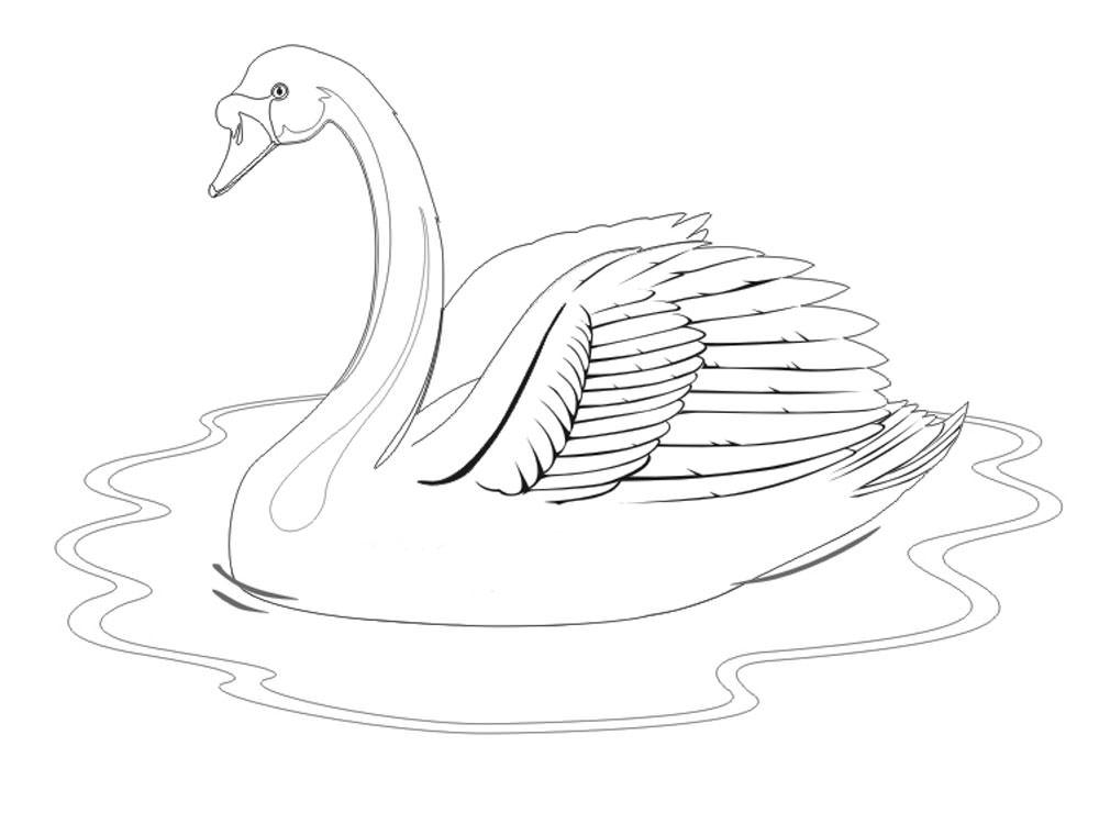 Картинка лебедь для детей рисунок