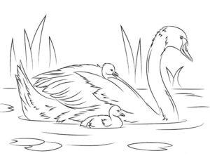 Лебедь картинки раскраски (5)