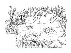 Лебедь картинки раскраски (9)