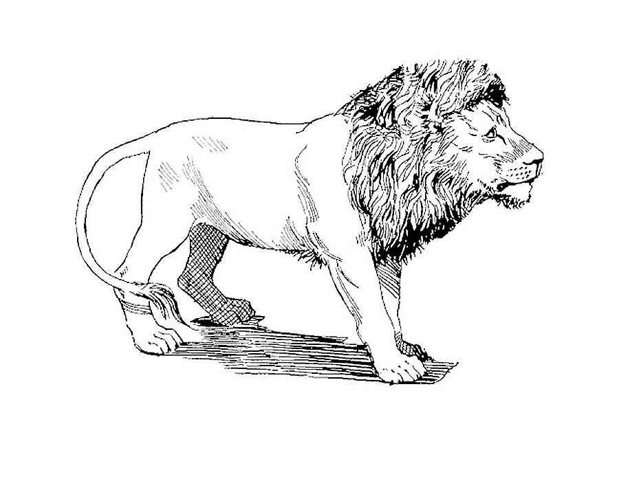 рисунки животных лев бланка новой формы
