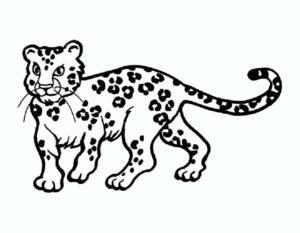 Леопард картинки раскраски (1)
