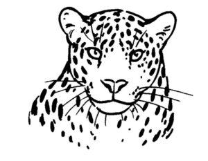 Леопард картинки раскраски (11)