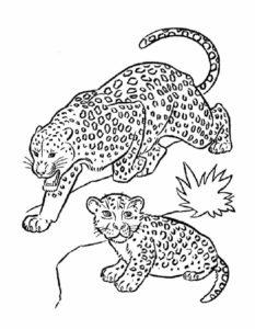 Леопард картинки раскраски (13)