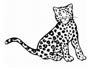 Леопард картинки раскраски (14)