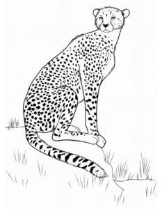 Леопард картинки раскраски (15)