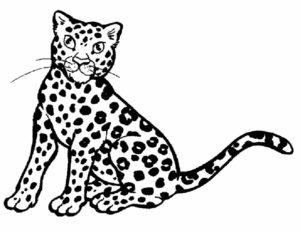 Леопард картинки раскраски (16)
