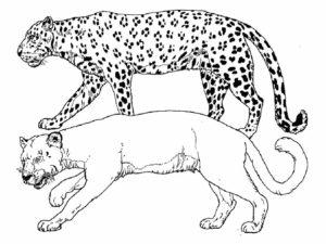 Леопард картинки раскраски (17)