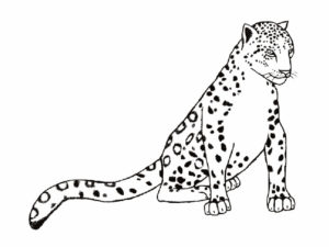 Леопард картинки раскраски (18)